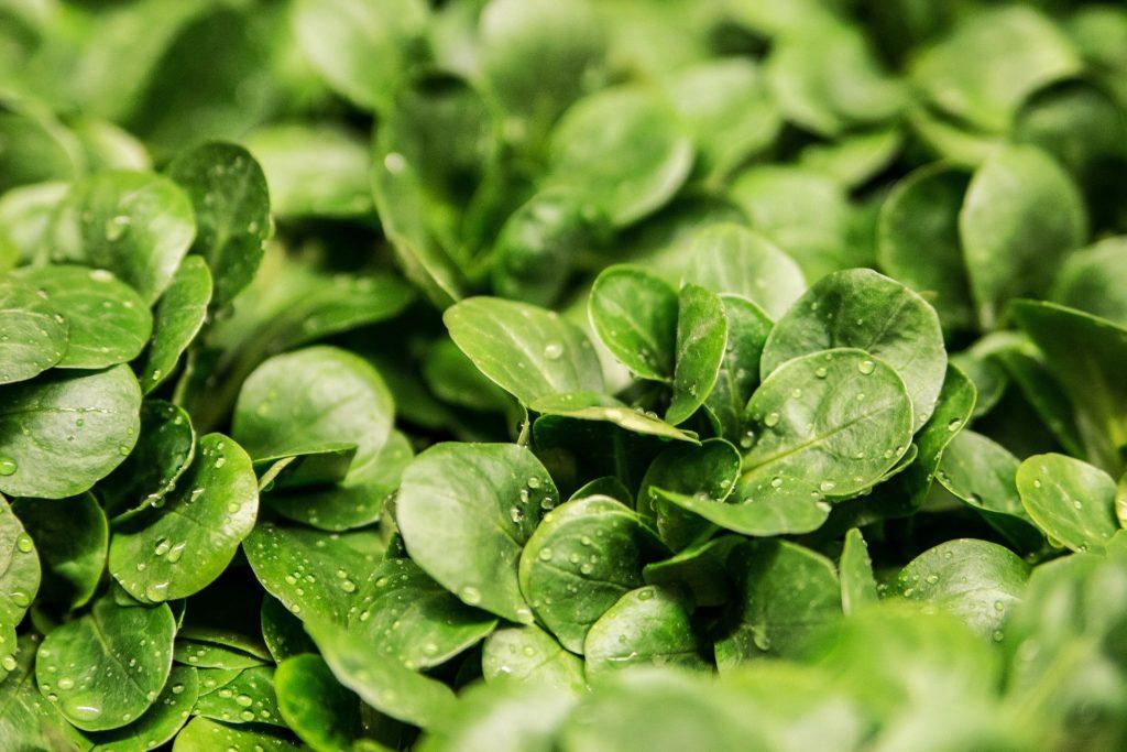 salad-264826_1920